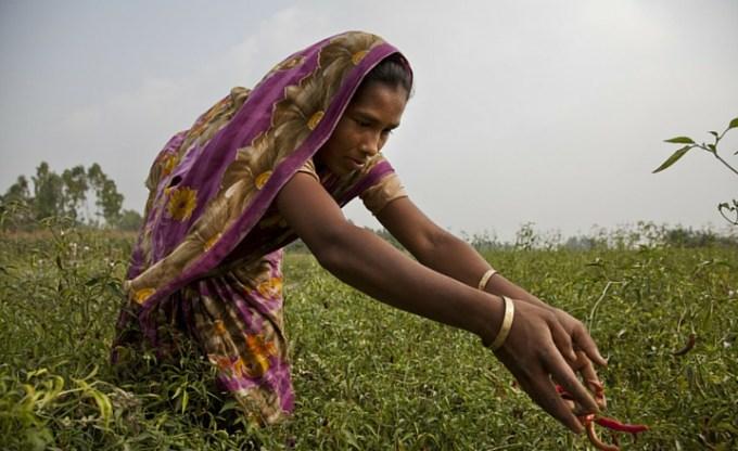 Oxfam: building futures through chilli farming