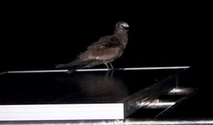 our visitor bird in the last night arrived in the evening, took some sleep and of course used the bathroom on all three solar panels...and in the morning he was gone again