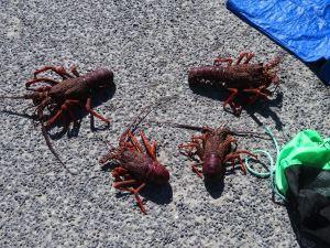 Lobster Kaikoura