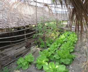 Garden Abaiang