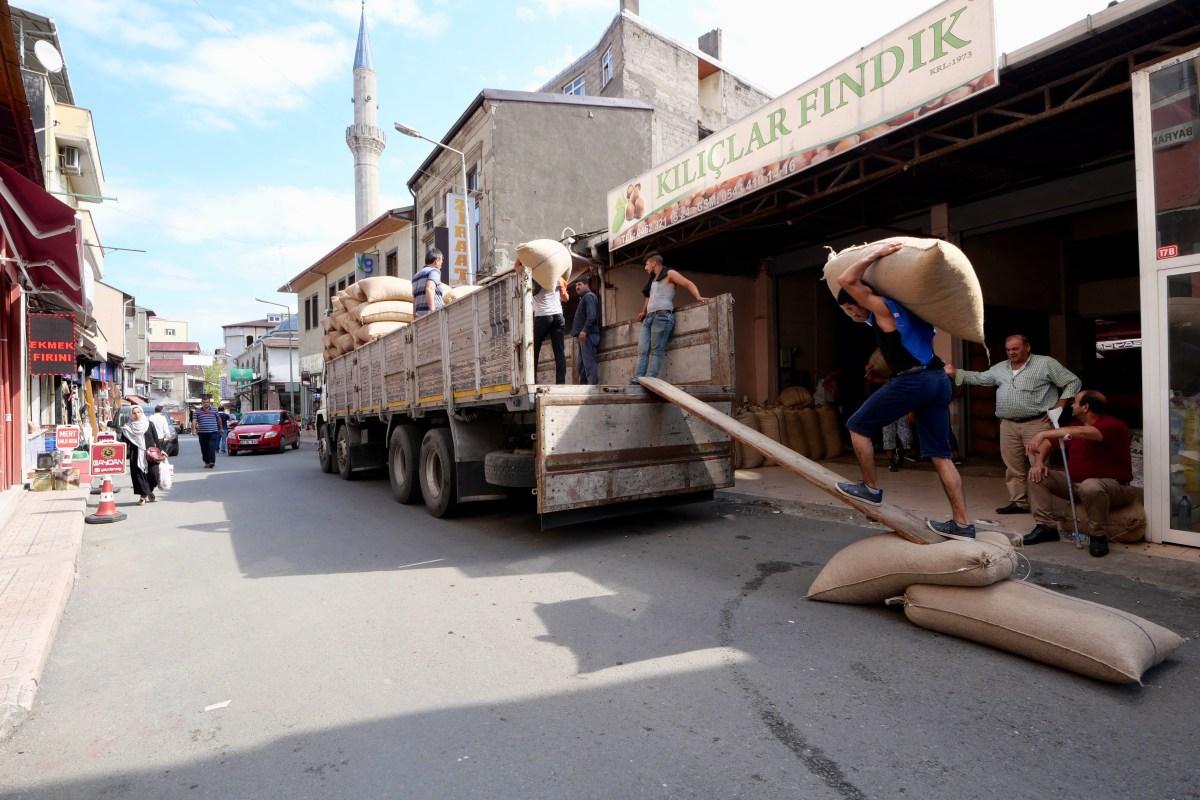 Nüsse und nochmals Nüsse: Die Haselnussproduktion ist einer der wichtigsten Wirtschaftszweige an der türkischen Schwarzmeerküste. (Bild: Martin Bichsel)