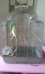 Our birdcage find!