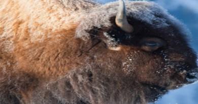 Animal and Wildlife Photography
