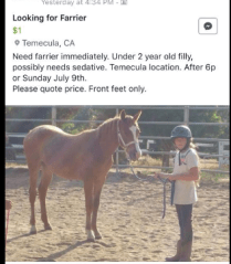 Nice work to adopt out a horse that can't even have her feet handled to a child. Kudos to the parents for the helmet though.