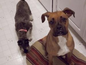 Bella and Tara