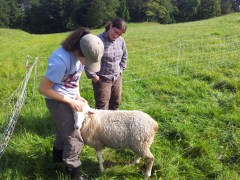 Petting Agnes! Like most hand-raised lambs, she loves people!