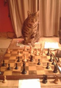 Oscar, Dave's cat, reviewing his game against Steve last night.