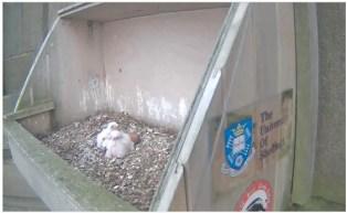 May 2 3 chicks