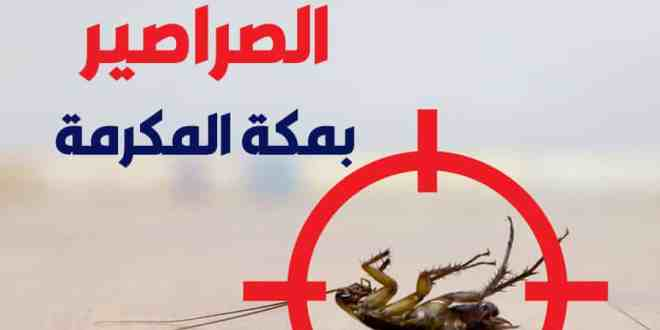 شركة-مكافحة-الصراصير-بمكة