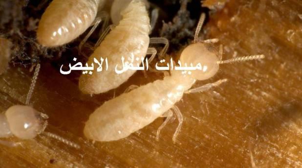 مبيدات النمل الابيض
