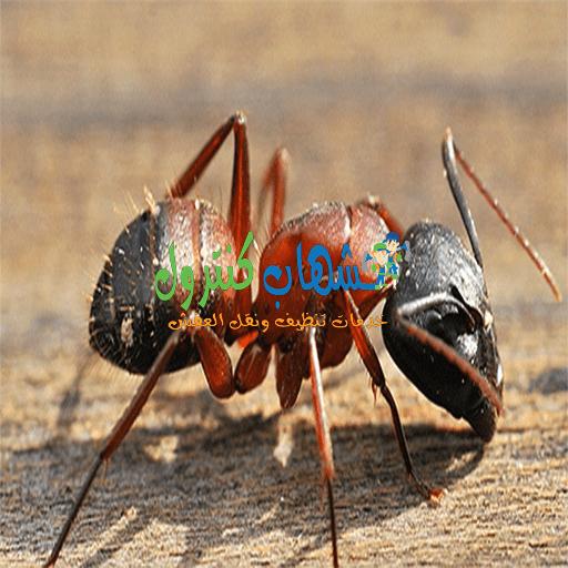 اضرار النمل الاحمر