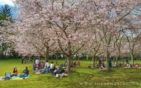 KEMBARA #KBBA9 COSMODERM – IKHLAS TOURS KE NEW ZEALAND | WHAKAPAPA SKIFIELD – WESTERN SPRINGS – CORNWALL PARK – ONE TREE HILL (PART 7)
