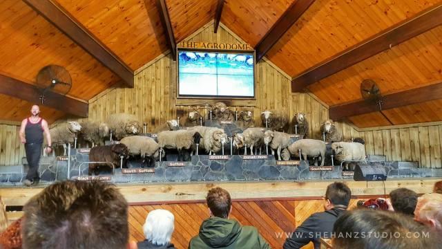 KEMBARA #KBBA9 COSMODERM - IKHLAS TOURS KE NEW ZEALAND BLUE LAKE, TARAWERA, AGRODOME AT ROTORUA (SPRING TIME) (PART 5) (18)