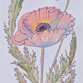 """Red Poppy, watercolor, 5"""" x 7"""""""