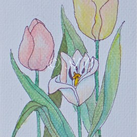 "Tulip Trio, watercolor, 8"" x 10"""