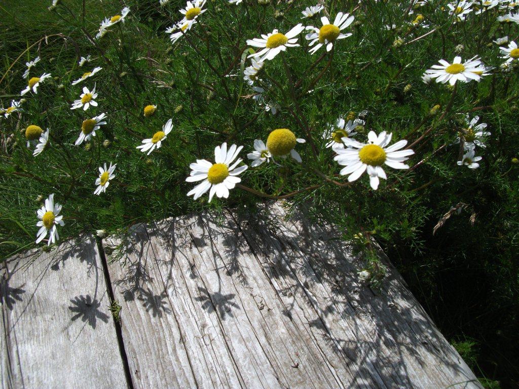 daisys-isle-of-skye