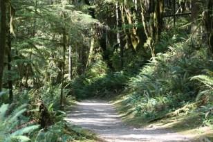 Sunshine Coast Forest Copyright Shelagh Donnelly