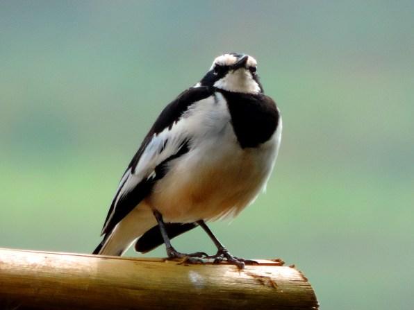 The Proud Bird