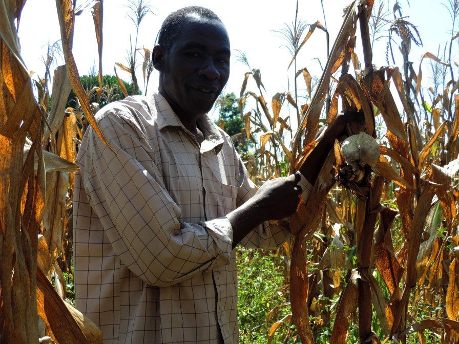 """Farmer says his success with producing high quality maize has made him a role model in his community. """"Other farmers will visit me and my maize fields to see if it is time to harvest."""""""