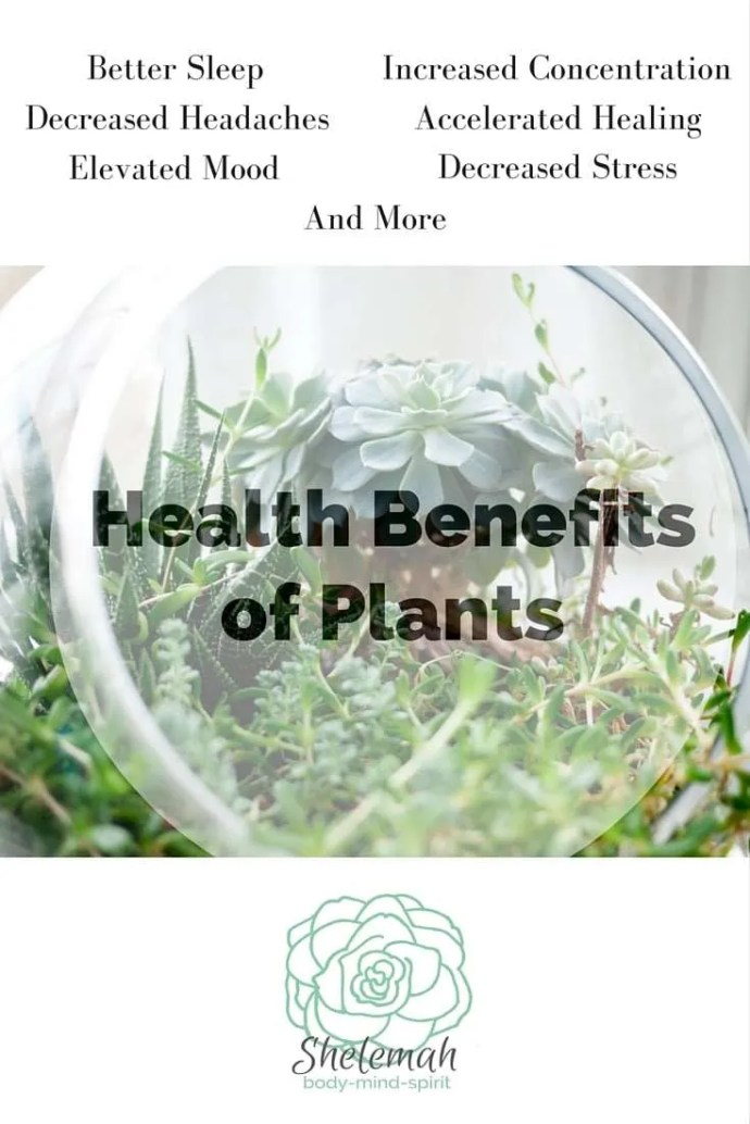 Keeping a plant in every room of your house has multiple health benefits - and not all physical. Learn 3 reasons why you need more foliage in your home. #houseplants #healthyliving