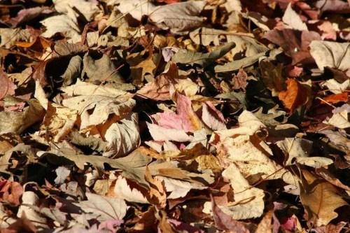 leaves for insulation