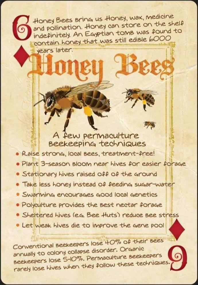 honey bee playing card