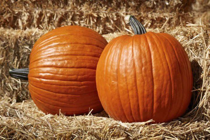 Turn your Pumpkins into Delicious Foods