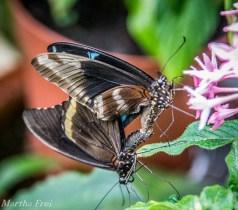 Die machen grade neue kleine Schmetterlinge ;-)