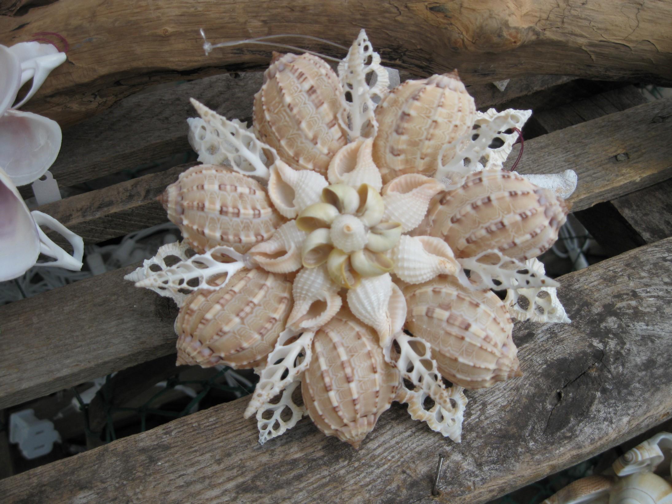 Shell Designs Seashell And Mosaic Art