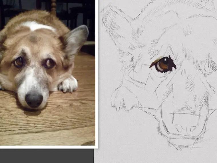 Step 1 - 9 Helpful Dog Portrait Tips