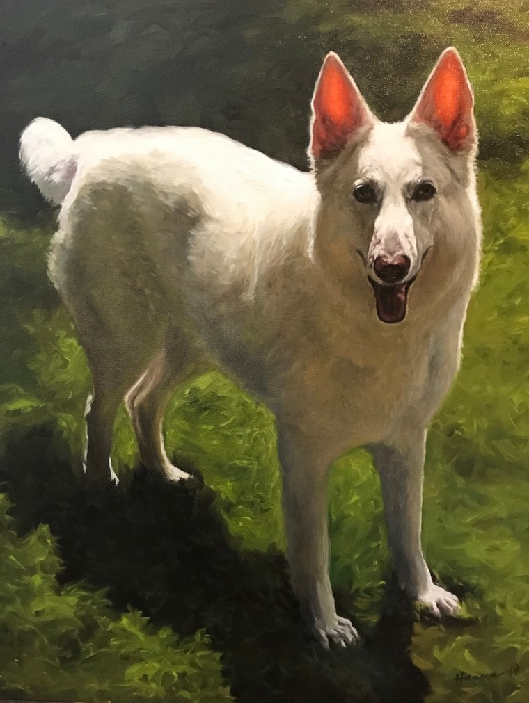 Final Portrait of White German Shepherd Maiden