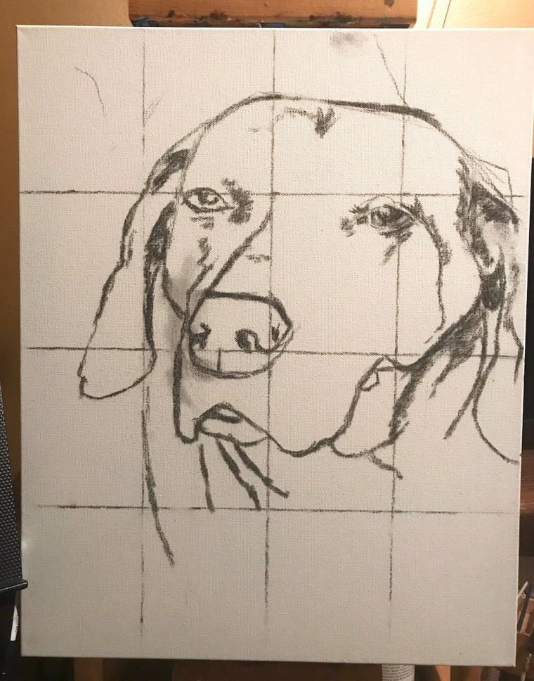 mistake sketch senior dog