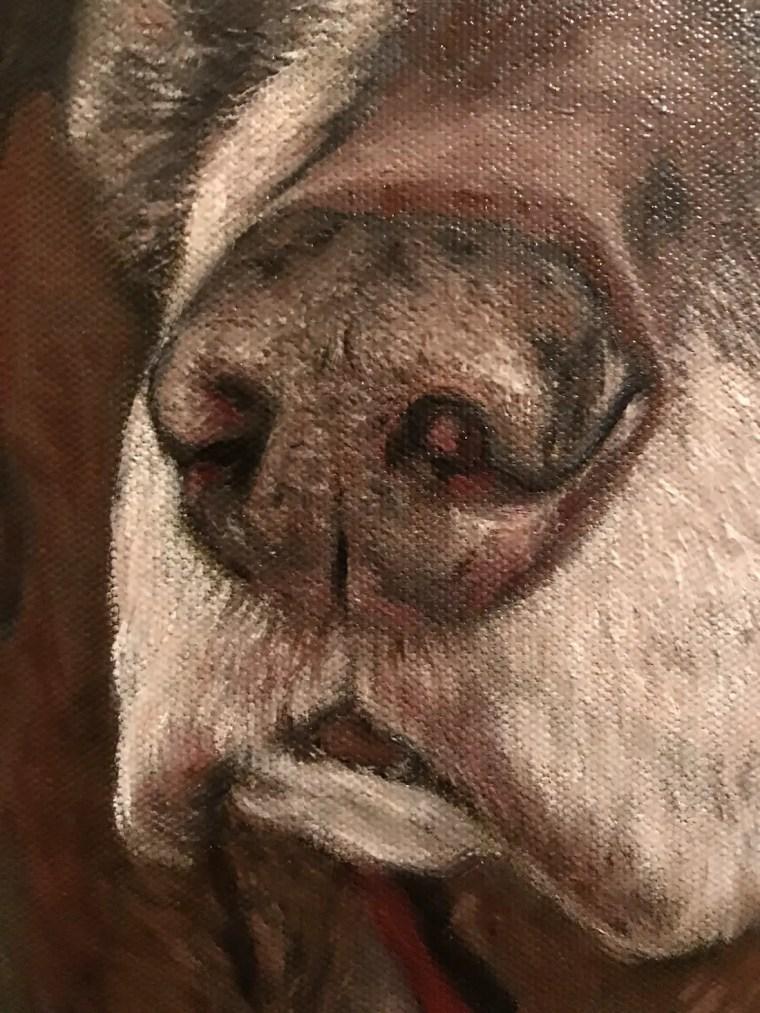 Detail of senior dog nose