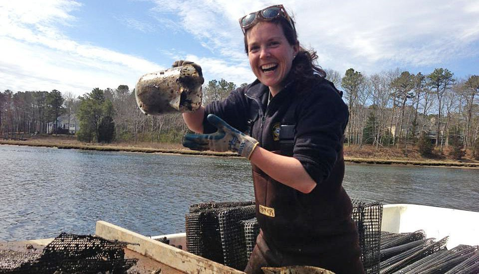 Liz Lewis, Barnstable Shellfish Technician at work