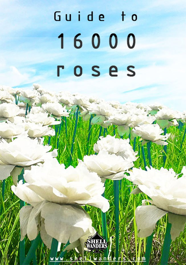 Guide to 16,000 roses in baybay leyte