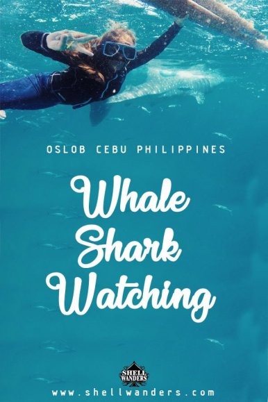 whale shark watching oslob philippines shellwanders2