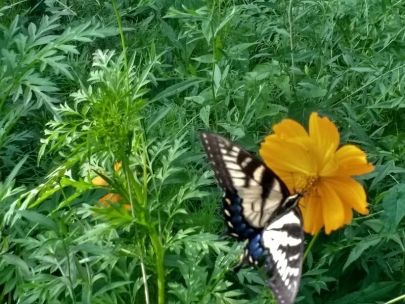Butterfly #8.jpg