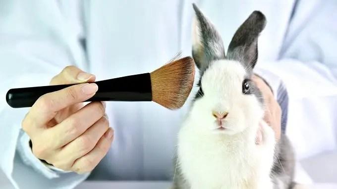 best-cruelty-free-foundation-concealer-eye-cream