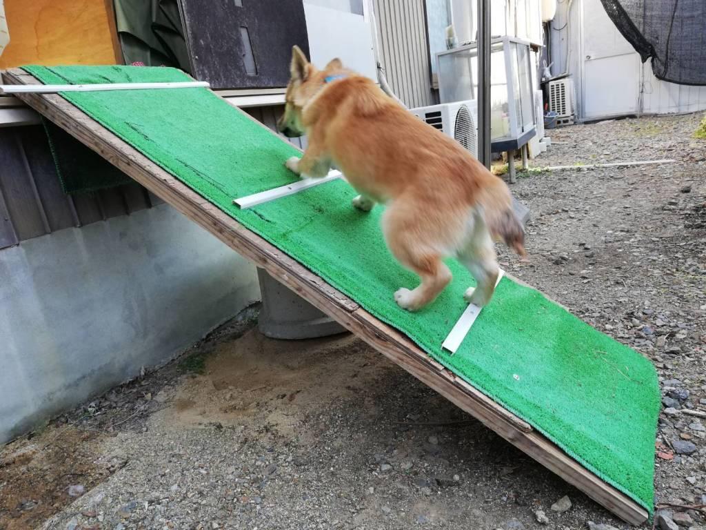 岡山保護犬あおの1日これ登るの?