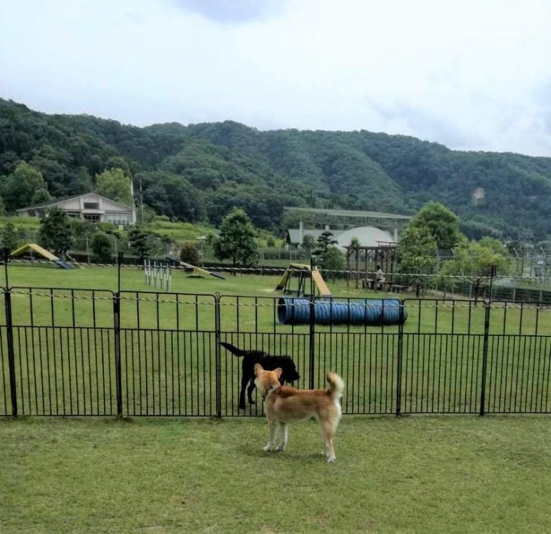 岡山保護犬あおの一日、岡山動物愛護センターのドッグラン