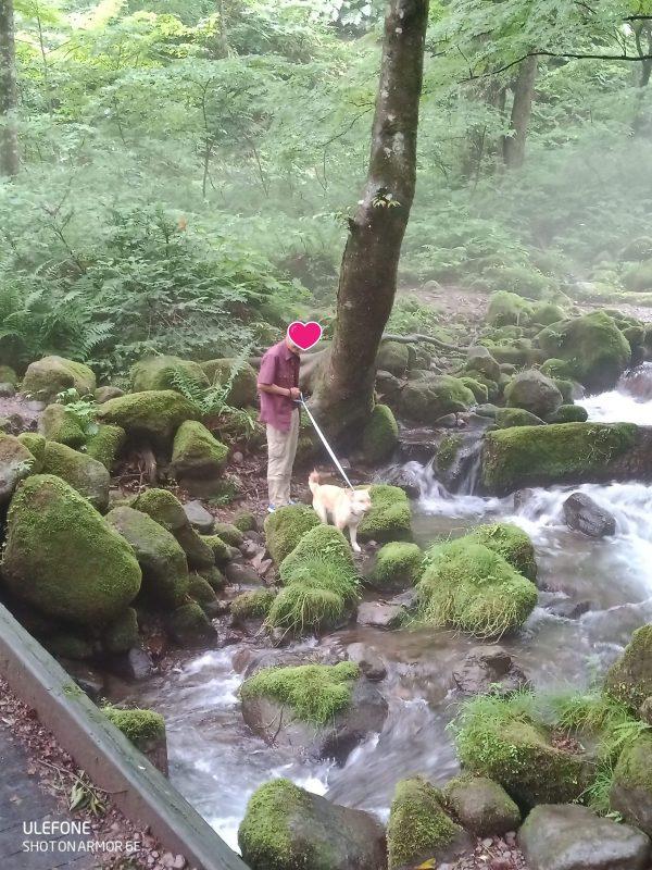 岡山保護犬あおの一日、木谷沢渓流