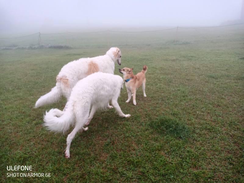 岡山保護犬あおの一日、豪円山ドッグラン