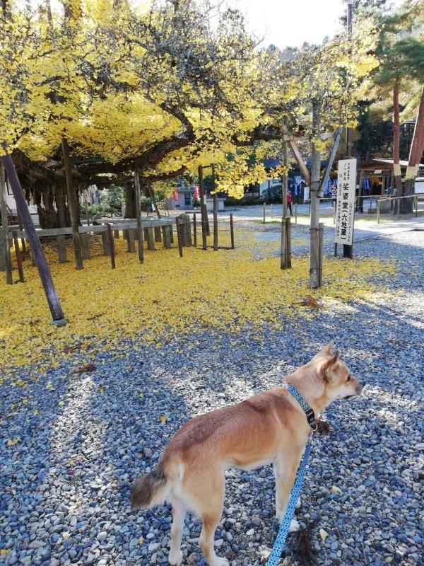 岡山保護犬あおの一日誕生寺