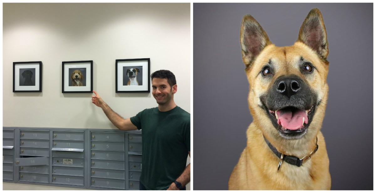 Photographer Transforms His Apartment Mailroom Into Gallery to Support Shelter Pets