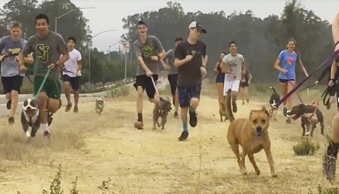 High school cross country team takes shelter dogs for a run