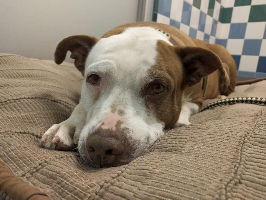 Senior dog needs a home