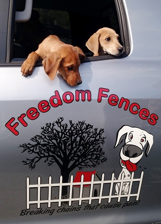 Freedom Fences Is Changing The Lives Of Dogs Once Forced To Live On Chains