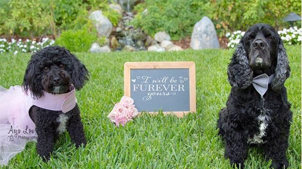 Shelter Alumni Dogs to Wed