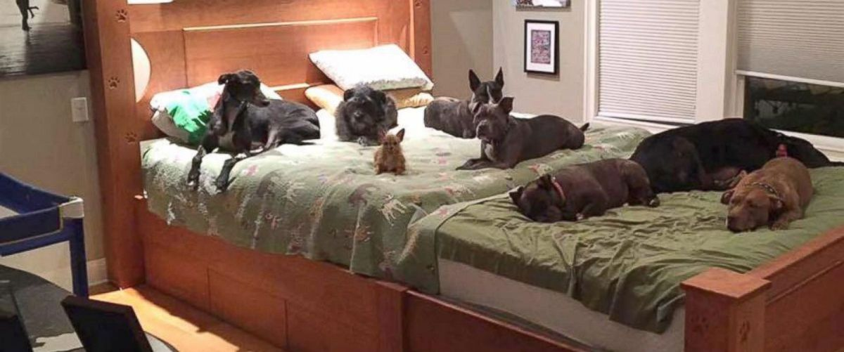 Couple Has Giant Bed Built So They Can Cuddle With Their 8 Adopted Dogs