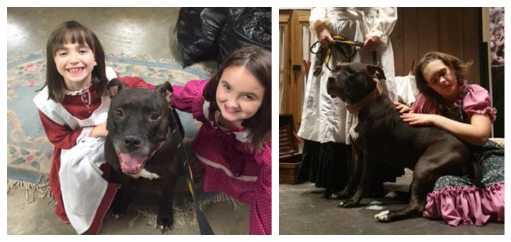 Rescue Pit Bull Stars In Play, Earns Rave Reviews As Stereotype-Buster